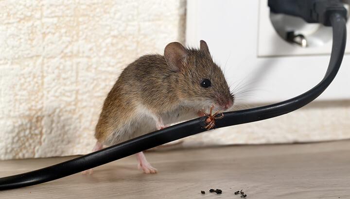 probl mes de petites b tes 4 rem des faits maison pour se d barrasser naturellement des souris. Black Bedroom Furniture Sets. Home Design Ideas